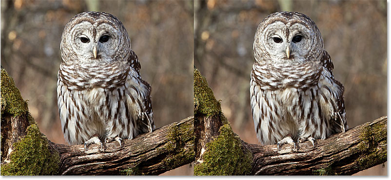 A comparison of the image sharpening results using High Pass with the Overlay and Soft Light blend modes in Photoshop